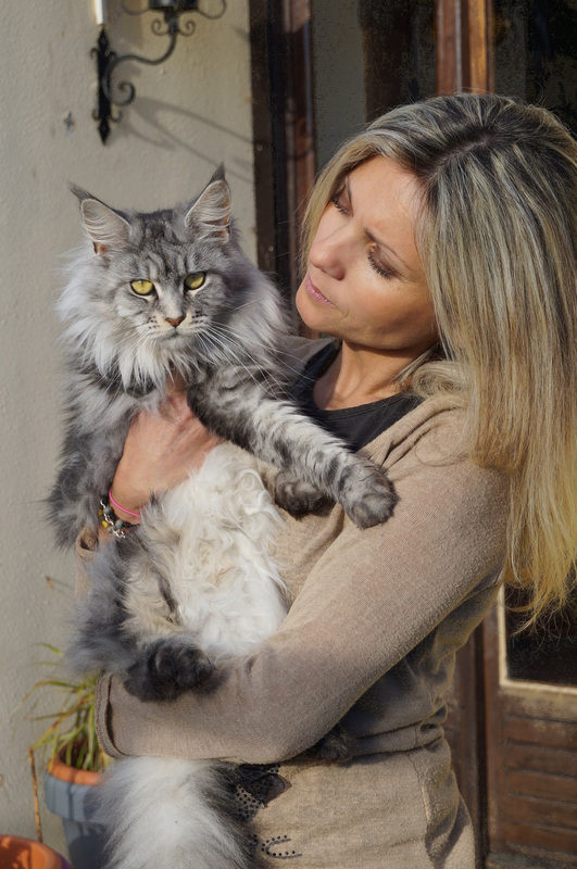 Elevage De Chats Maine Coon Loof Accueil Home
